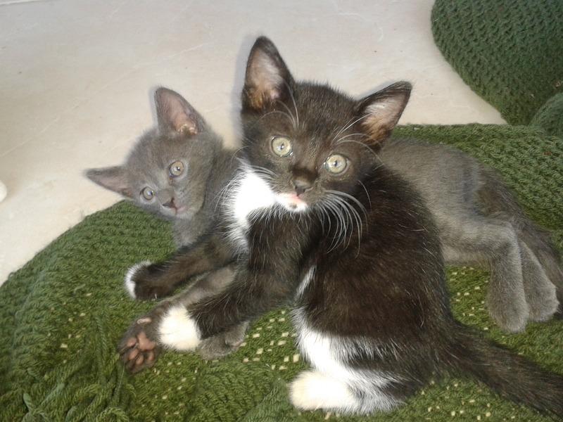 3 γατάκια, 2 μηνών 20140805_193313