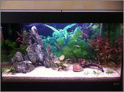 Aquarium 125L - asiatique- sable et déponit IMG_1121