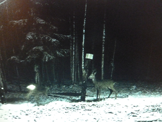 Boars Cam, Winter 2013 - 2014 - Page 4 The_couple_again_23_12_003