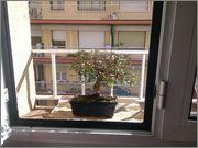 Mi primer bonsai, consejos DSC_0030