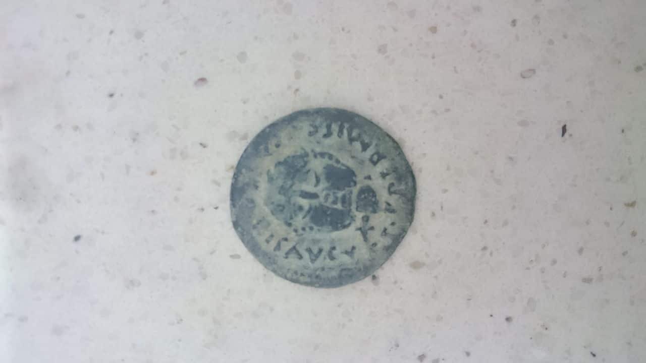 As emerita augusta cabeza barbada de frente DSC_0111