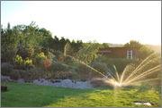 Léto na zahradě - Stránka 2 DSC_0002