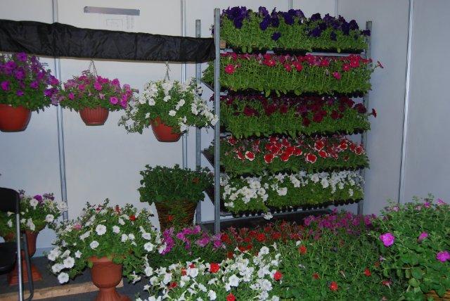 Международная выставка цветов AstanaFlorExpo - 2011 D26796d8f65c
