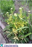 Лето в наших садах - Страница 2 3156b35159cdt