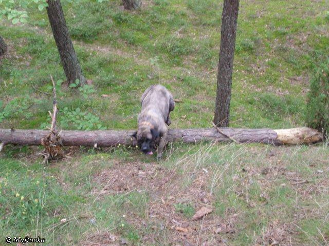 Наши собаки, друзья и гости, кот Мензурка Ce81b7349c78