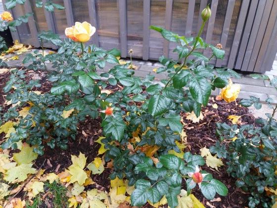 Осень, осень ... как ты хороша...( наше фотонастроение) - Страница 8 Eb6605412873