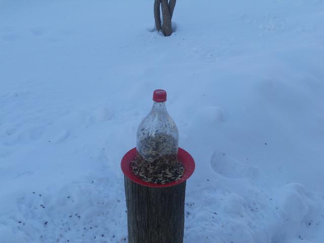 Zima i ptice u prirodi Zima_002