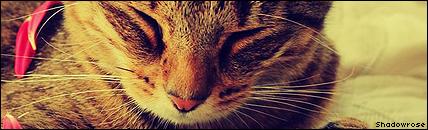 Wat zouden jouw kattennamen in het nederlands zijn? - Pagina 3 Shadowrose1sig