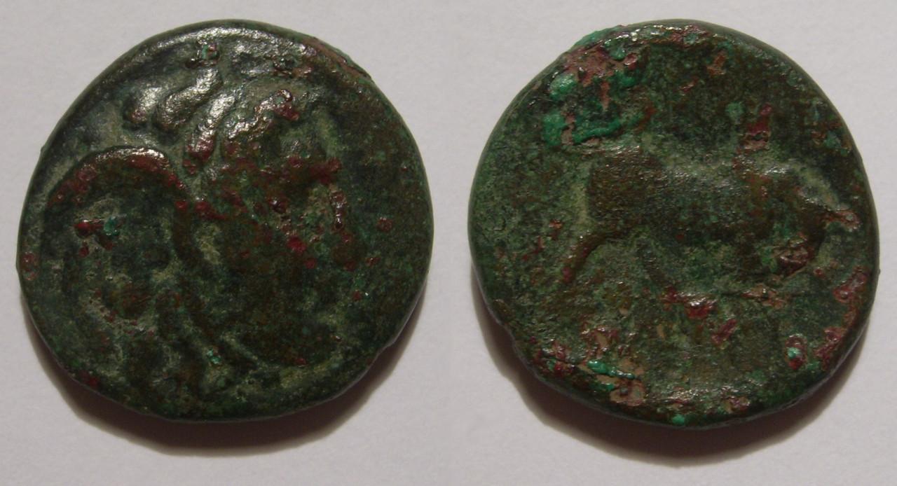AE20 de Seleuco I Nicátor. ΒΑΣΙΛΕΩΣ ΣEΛΕYKOY. Antioquía 004