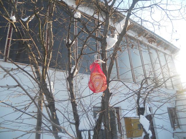 Zima i ptice u prirodi Zima_001
