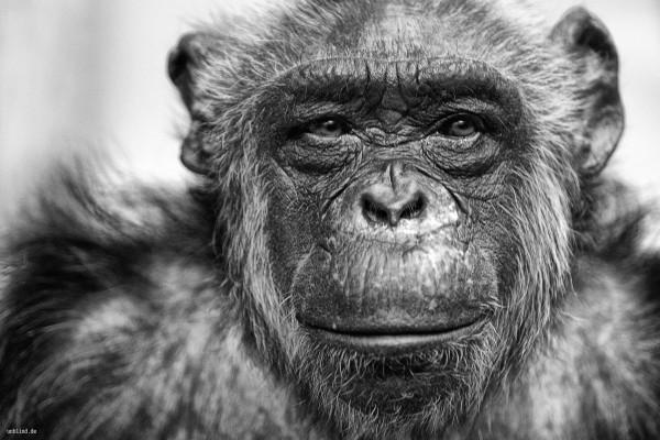 Majmuni - Page 4 Nenby8210vn