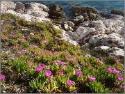 Určení druhu rostliny - Stránka 4 P5081756