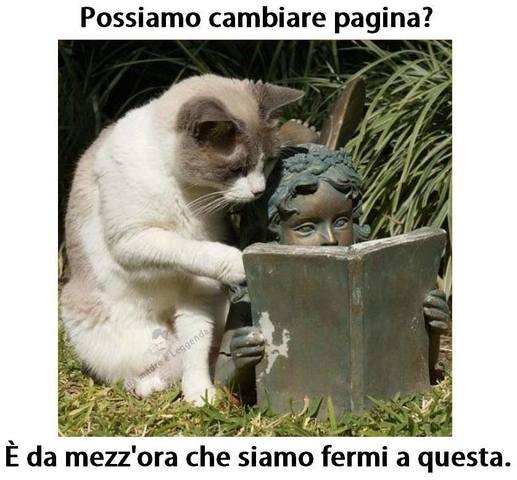 VIGNETTE DIVERTENTI - Pagina 27 Gatto_stupido