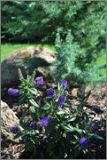 Léto na zahradě - Stránka 2 DSC_0022