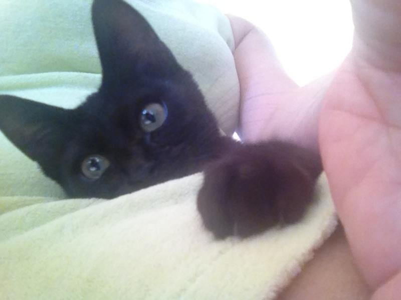Πανθηράκος 2,5 μηνών αναζητάει την οικογένειά του Mailo_003
