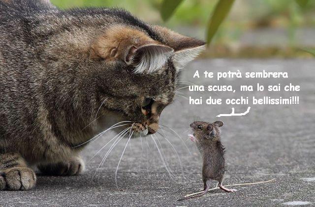 VIGNETTE DIVERTENTI - Pagina 24 Topo_occhi_gatto