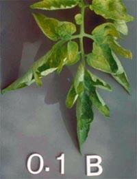 Nutrição de Plantas Aquaticas: Função, Deficiência e Fertilização. Nutricao_vegetal_8