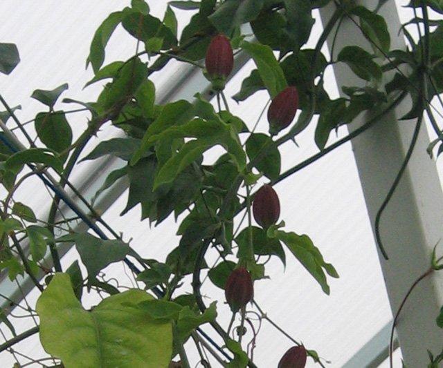 Растения из Нижегородской оранжереи Df895ce331ed