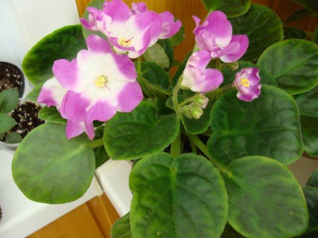 Мои цветочки - Страница 19 612f26cc0d21