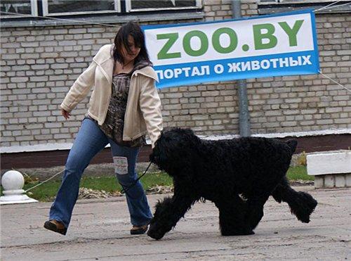 23 октября 2011 выставки в Молодечно - Страница 2 Ac98e19d4a52