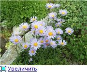 Растения для альпийской горки. 1cffe0f7b623t