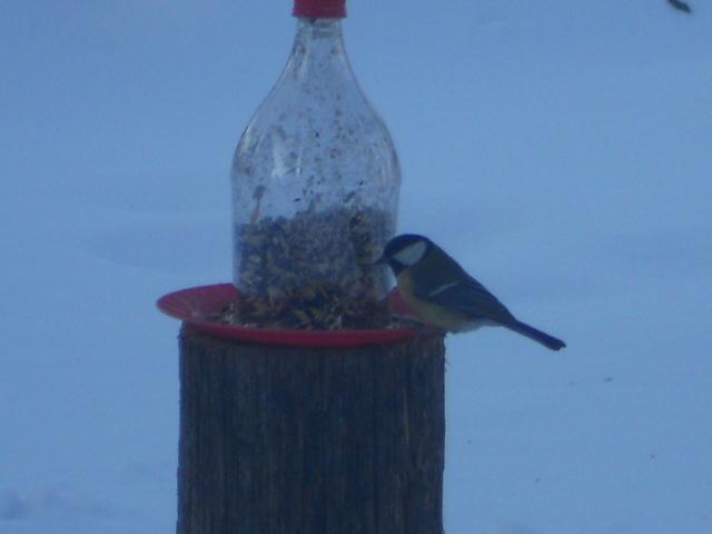 Zima i ptice u prirodi Zima