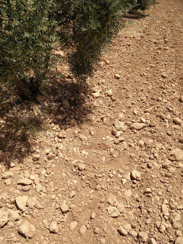 cosecha 2017-18 - Página 5 IMG_20170526_135456