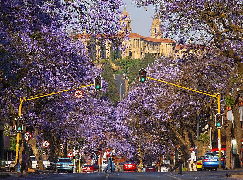 Adivina la ciudad - Página 3 800px-_Jacaranda_Trees_Pretoria