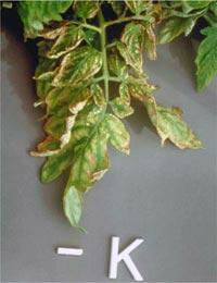 Nutrição de Plantas Aquaticas: Função, Deficiência e Fertilização. Nutricao_vegetal_5