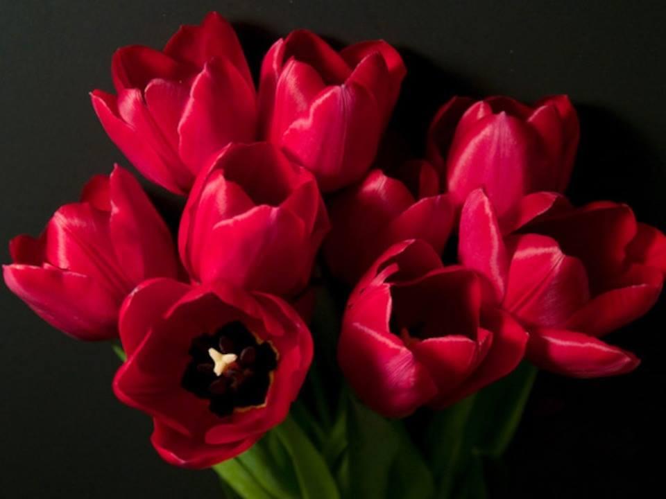 Crveno cveće - Page 6 1425597_540059909491058_8875124658614345033_n