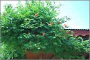 Léto na zahradě DSC_0116