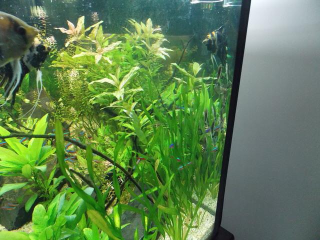 Aquário plantado de 200 litros - Página 4 Image
