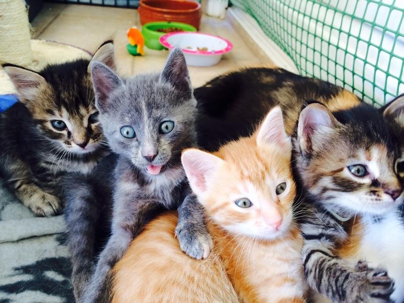 Κάρι, μια υπέροχη γατούλα και τα 4 μωράκια της - Σελίδα 3 Image