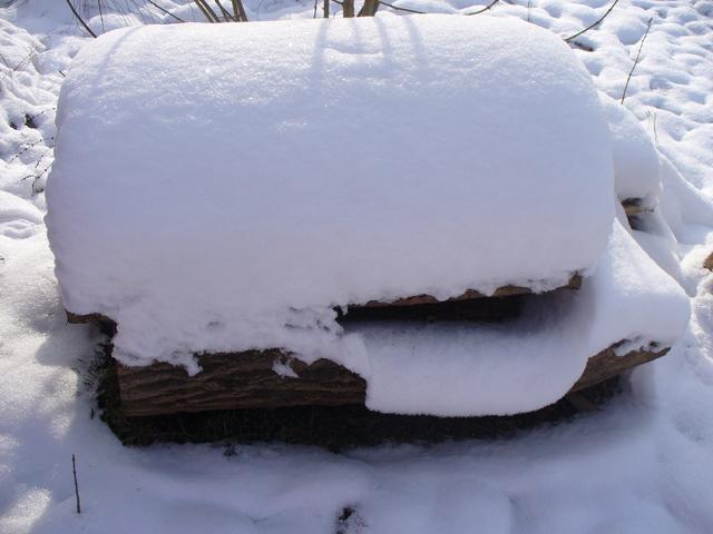 iarna ca un vis frumos P1040396
