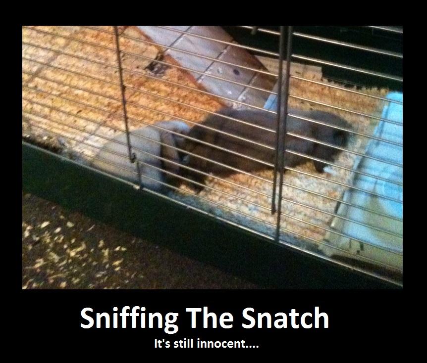 OrGaSm  Sniffing