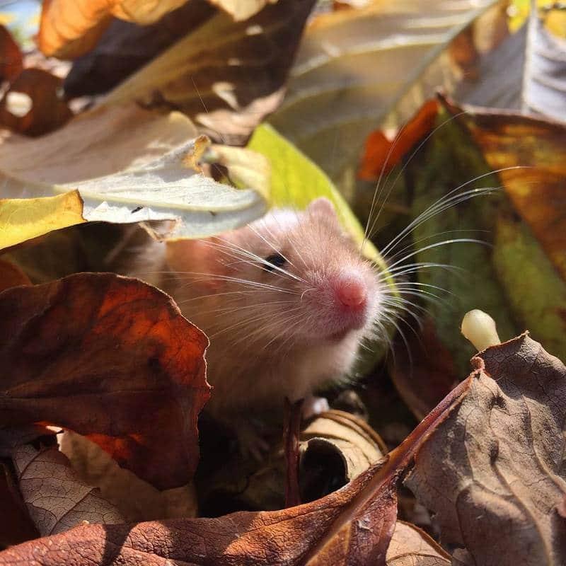 Pumpkin Mice - Updates 14574066_1778950542321752_3570669384206647296_n