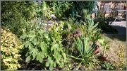 Léto na zahradě - Stránka 2 WP_20150720_021