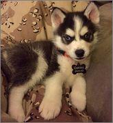 Oakley's puppy scrapbook! Photo_Dec_29_9_58_32_PM