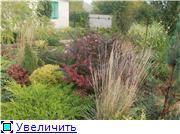 Cад Людмилы Ивановой из черкасс 93e1b9a131fct