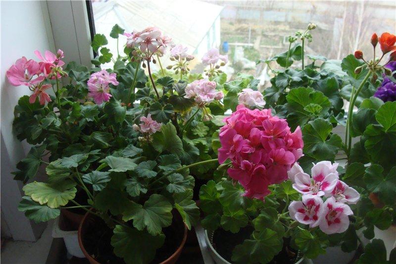 Весеннее  цветение (Хваст от Веры) - Страница 9 387ad6742b25
