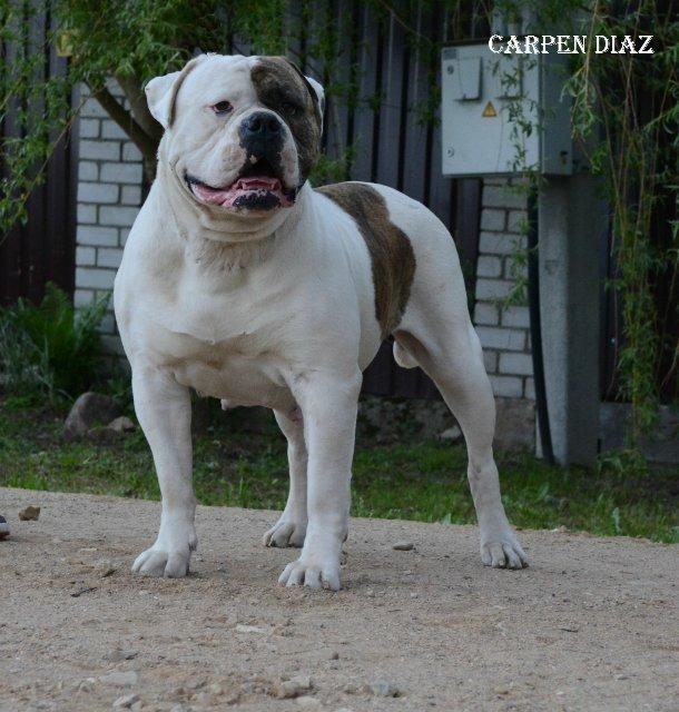 Собаки питомника Carpen Diaz - Страница 2 2987aed26194