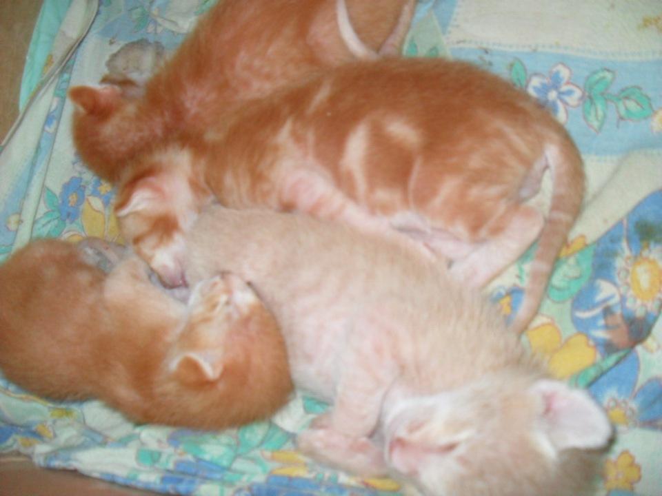 Домашние любимцы Кошки и Собаки - Страница 18 2c6c4a9d0362