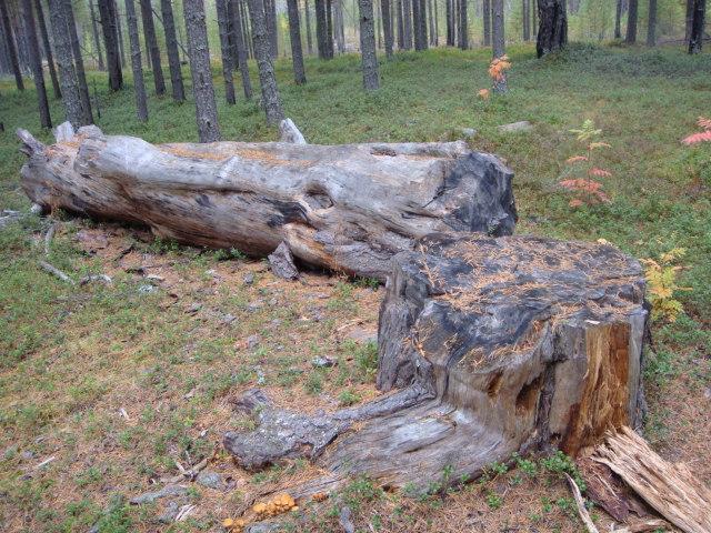 Карелия,край лесов и озёр DSC02550