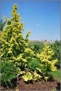 Léto na zahradě DSC_0121