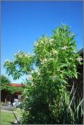 Léto na zahradě DSC_0129
