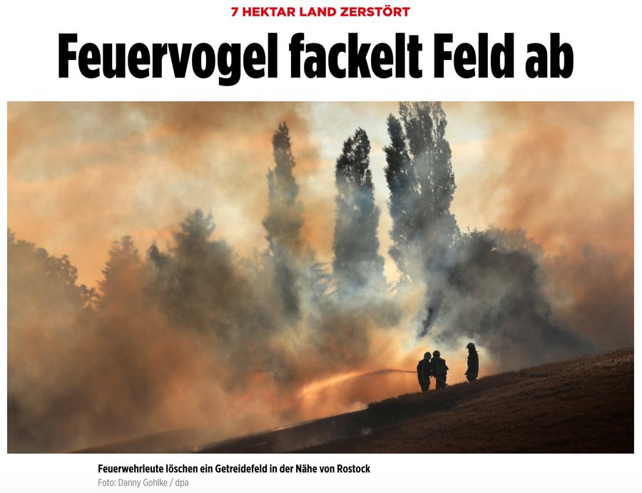 Presseschau - Seite 36 Feuervogel2