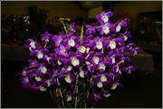 Identificare orhidee - Pagina 2 Attachment_1