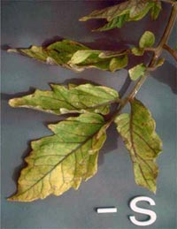 Nutrição de Plantas Aquaticas: Função, Deficiência e Fertilização. Nutricao_vegetal_3