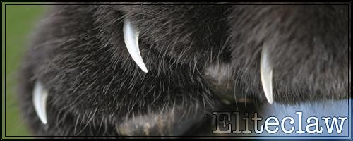 Warrior Cats Game - Pagina 4 Eliteclaw