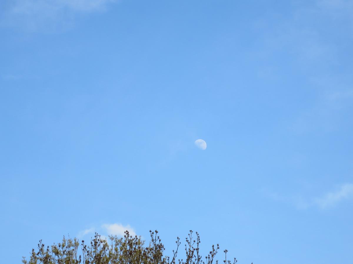 Die Erde, in der wir leben und der Raum, der die Welt ist - Seite 7 Mond
